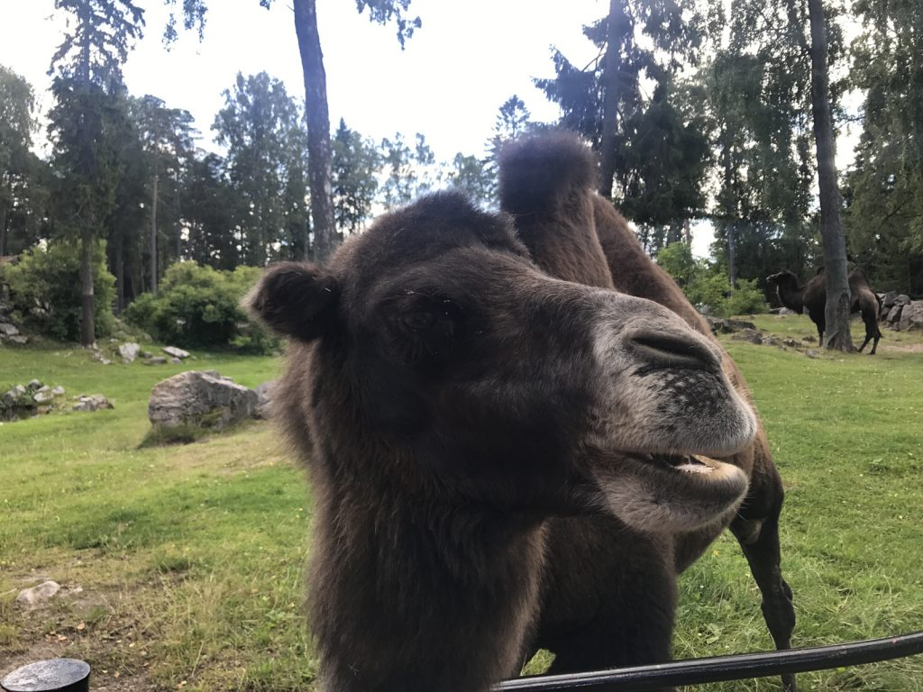 Djurpark på Furuvik