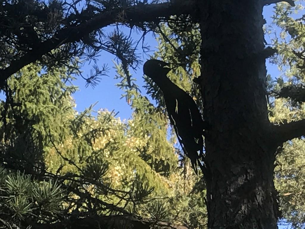 Tyresta Nationalpark Tjäderstigen