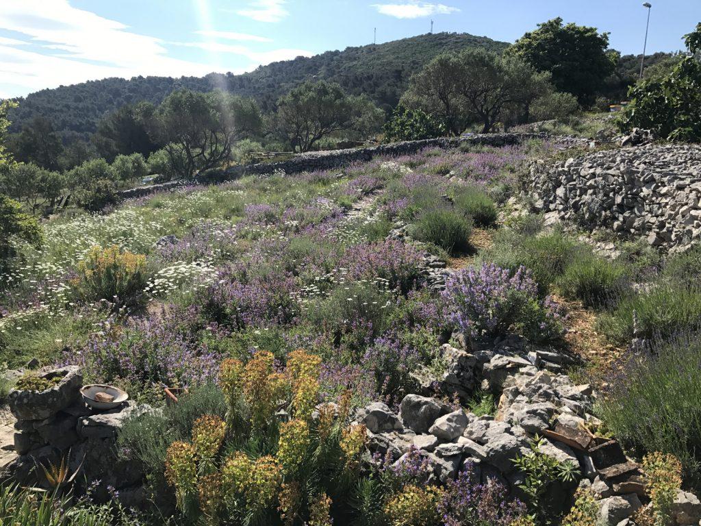 Garden of fine scence Lošinj