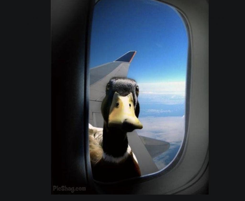 Flygförseningar