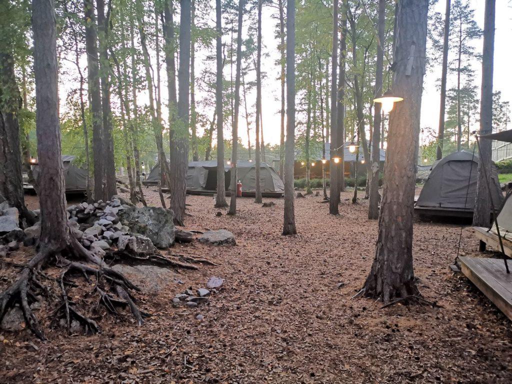 Safari Camp på Kolmården - Weekend på Kolmården
