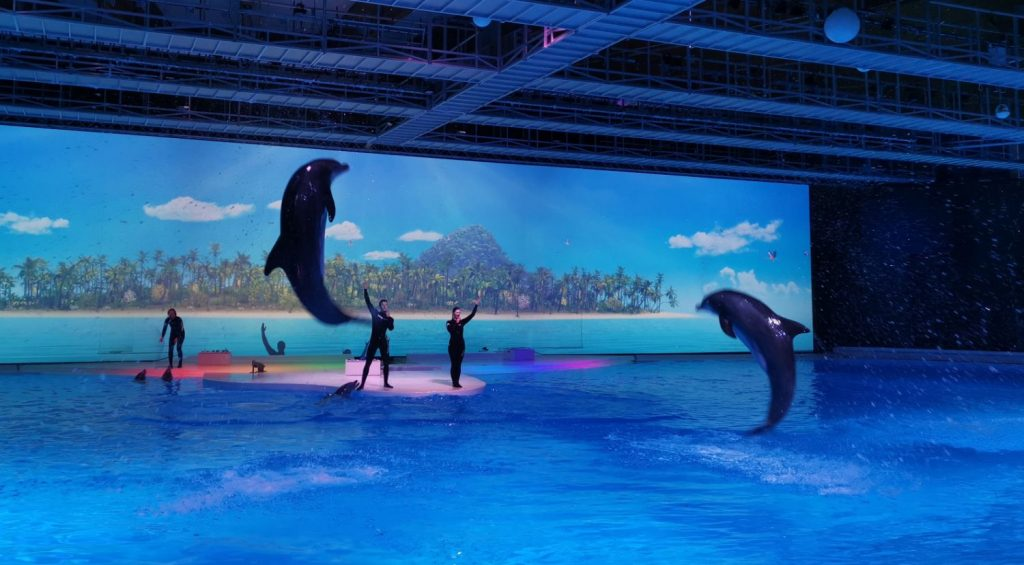 Delfinshowen Hope på Kolmården - premiär 2020