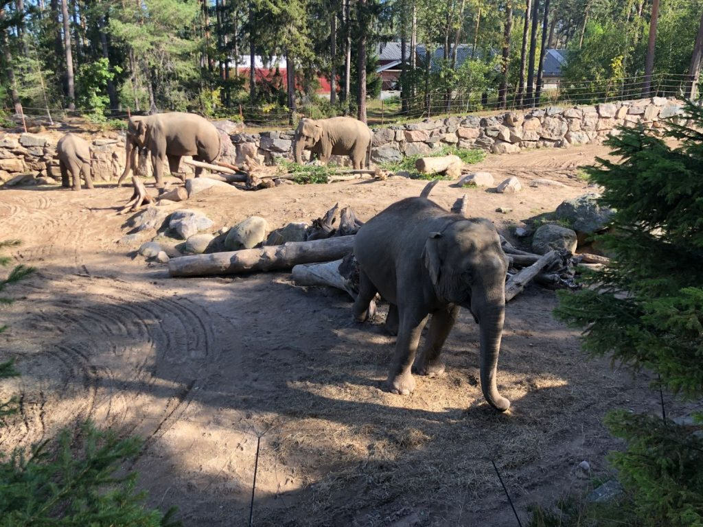Kolmården Elefanter