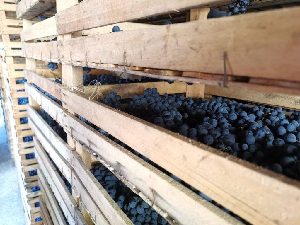 Torkning i 100 dagar för att bli Sfursat-vin