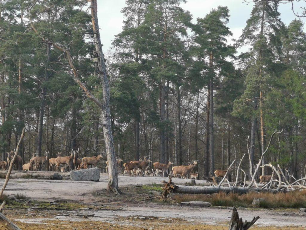 Eriksbergs Safairpark