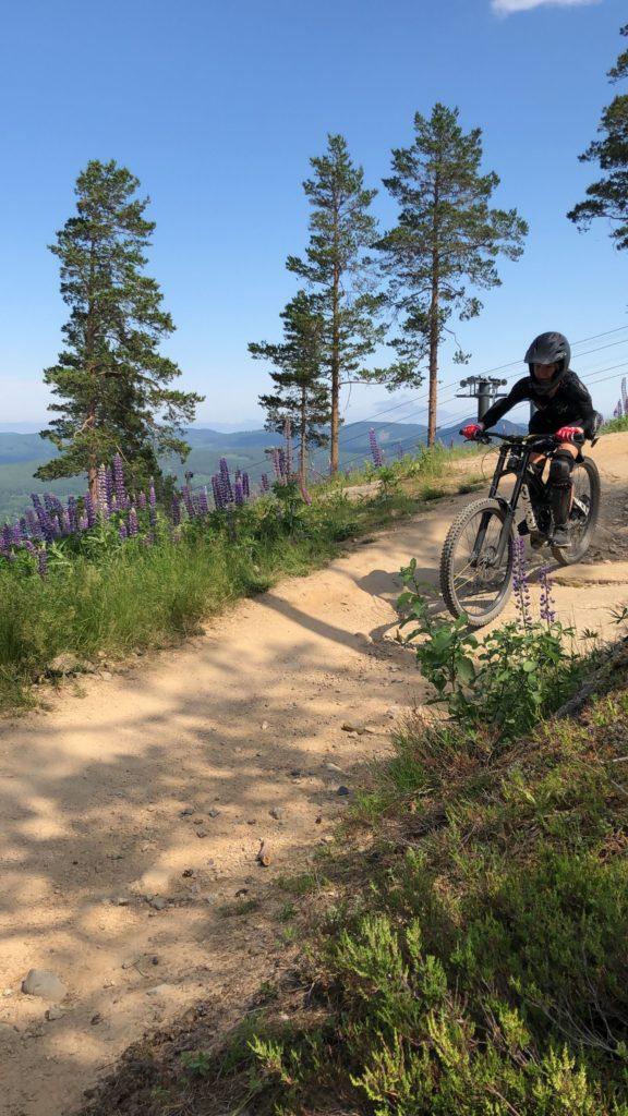 Downhill i Järvsö Bergscykel Park