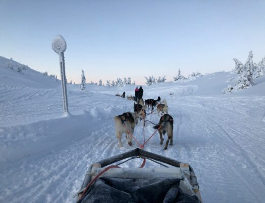 Hundspann i Sälen med Fjälläventyr