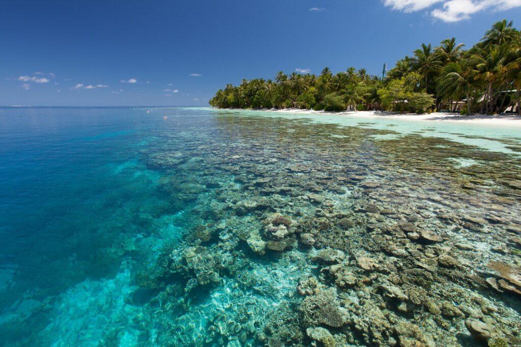 Diving at Vilamendhoo island resort & spa i Maldiverna