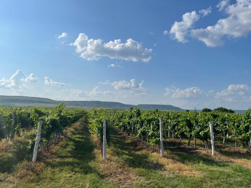 Besök på vingård i Bulgarien